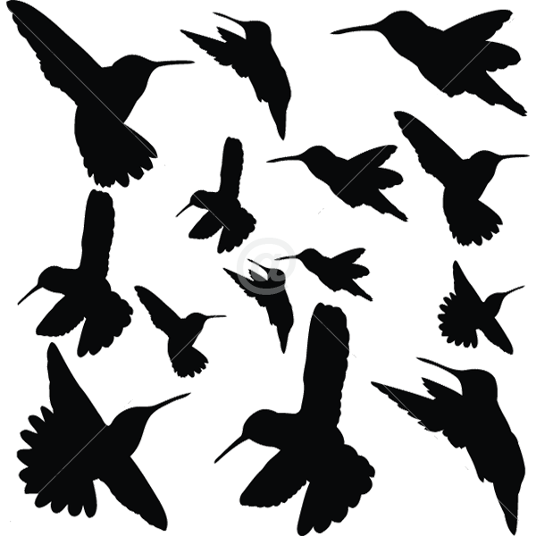 B2502-Decor-animal-bird-sticker-wall