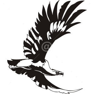 B3034-Decor-animal-Eagle-sticker-wall-cat